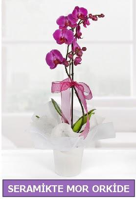 Seramik içerisinde birinci kalite tek dallı mor orkide  Yozgat İnternetten çiçek siparişi