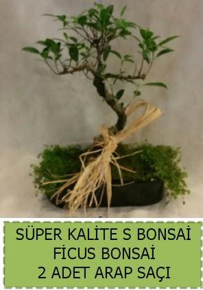 Ficus S Bonsai ve arap saçı  Yozgat çiçekçi telefonları