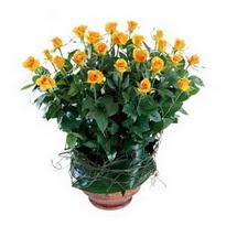 Yozgat cicekciler , cicek siparisi  10 adet sari gül tanzim cam yada mika vazoda çiçek