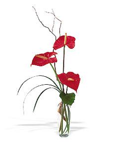 Yozgat çiçek siparişi sitesi  cam yada mika Vazoda 3 adet  antoryum