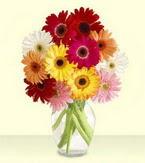 Yozgat çiçek yolla , çiçek gönder , çiçekçi   cam yada mika vazoda 15 özel gerbera