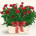 Yozgat İnternetten çiçek siparişi  11 adet kirmizi gül sepette