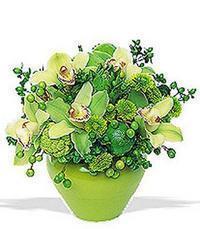 cam yada mika vazoda 5 adet orkide   Yozgat online çiçekçi , çiçek siparişi