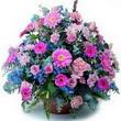 karisik mevsim kir çiçekleri  Yozgat çiçek gönderme sitemiz güvenlidir