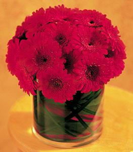 Yozgat ucuz çiçek gönder  23 adet gerbera çiçegi sade ve sik cam içerisinde