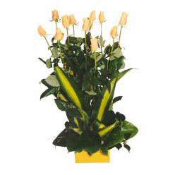 12 adet beyaz gül aranjmani  Yozgat kaliteli taze ve ucuz çiçekler