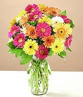 Yozgat çiçek online çiçek siparişi  17 adet karisik gerbera
