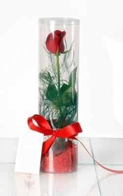 Yozgat çiçek yolla  Silindir vazoda tek kirmizi gül