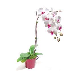 Yozgat çiçek gönderme  Saksida orkide