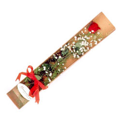 Yozgat çiçek , çiçekçi , çiçekçilik  Kutuda tek 1 adet kirmizi gül çiçegi