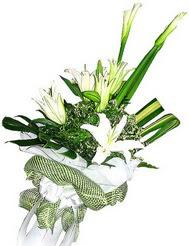 Yozgat güvenli kaliteli hızlı çiçek  3 dal kazablanka çiçegi ve yesillikler