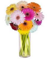 Yozgat internetten çiçek siparişi  Farkli renklerde 15 adet gerbera çiçegi
