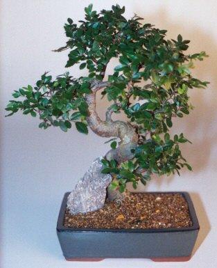 Yozgat çiçek gönderme sitemiz güvenlidir  ithal bonsai saksi çiçegi  Yozgat çiçek siparişi sitesi