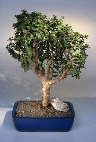 Yozgat çiçek gönderme  ithal bonsai saksi çiçegi  Yozgat çiçekçiler