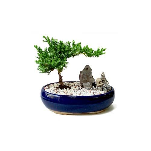 ithal bonsai saksi çiçegi  Yozgat çiçek gönderme