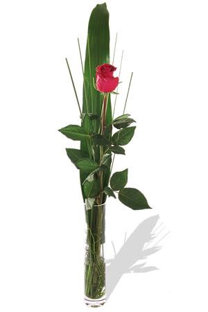 1 adet cam vazo içerisinde kirmizi gül  Yozgat çiçek , çiçekçi , çiçekçilik