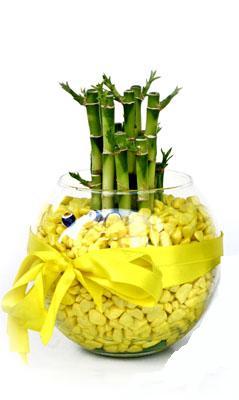cam fanus içerisinde bambo  Yozgat internetten çiçek satışı