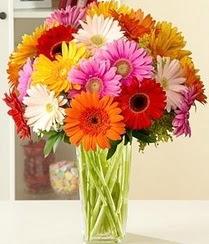 Yozgat çiçek servisi , çiçekçi adresleri  15 adet gerbera çiçek vazosu