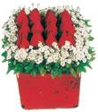 Yozgat çiçek gönderme  Kare cam yada mika içinde kirmizi güller - anneler günü seçimi özel çiçek