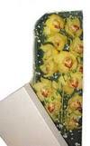 Yozgat çiçek gönderme  Kutu içerisine dal cymbidium orkide