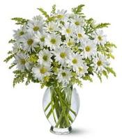 Vazo içerisinde beyaz krizantem çiçekleri  Yozgat çiçekçi mağazası
