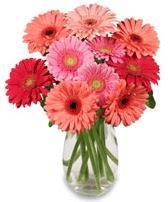 vazo içerisinde 13 adet gerbera çiçeği  Yozgat çiçek siparişi sitesi