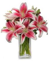 Vazo içerisinde 5 dal kazablanka çiçeği  Yozgat cicekciler , cicek siparisi