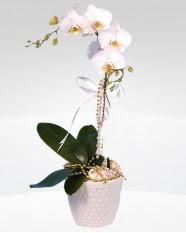 1 dallı orkide saksı çiçeği  Yozgat online çiçekçi , çiçek siparişi