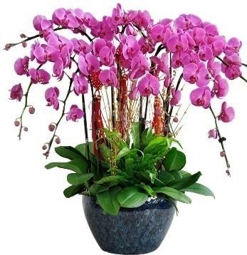 9 dallı mor orkide  Yozgat 14 şubat sevgililer günü çiçek
