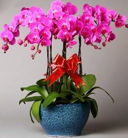 7 dallı mor orkide  Yozgat çiçek online çiçek siparişi