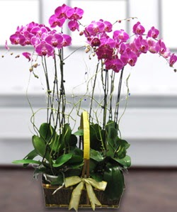 4 dallı mor orkide  Yozgat güvenli kaliteli hızlı çiçek