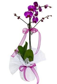 Tek dallı mor orkide  Yozgat çiçekçi telefonları