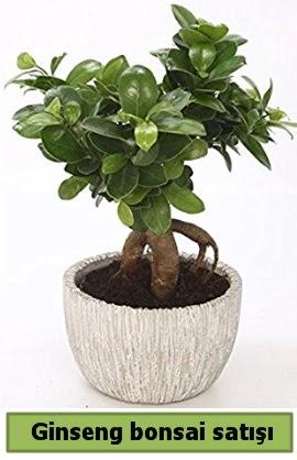 Ginseng bonsai japon ağacı satışı  Yozgat çiçekçi telefonları