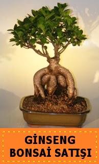 Ginseng bonsai satışı japon ağacı  Yozgat cicek , cicekci