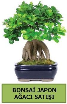 Bonsai japon ağacı satışı  Yozgat çiçek satışı