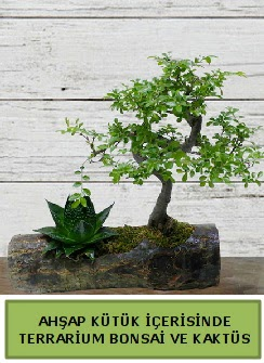 Ahşap kütük bonsai kaktüs teraryum  Yozgat internetten çiçek siparişi