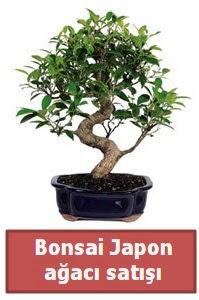Japon ağacı bonsai satışı  Yozgat çiçek siparişi sitesi