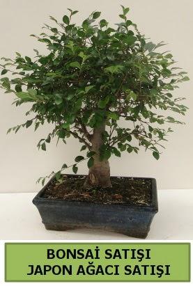 Minyatür bonsai japon ağacı satışı  Yozgat çiçek gönderme sitemiz güvenlidir