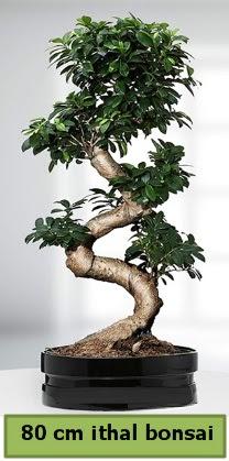 80 cm özel saksıda bonsai bitkisi  Yozgat çiçekçi telefonları