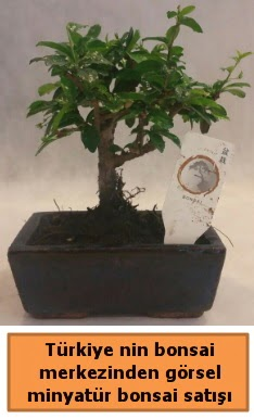 Japon ağacı bonsai satışı ithal görsel  Yozgat çiçek yolla
