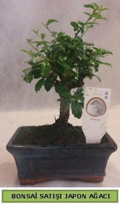 Minyatür bonsai ağacı satışı  Yozgat çiçek gönderme