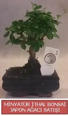 Küçük görsel bonsai japon ağacı bitkisi  Yozgat çiçek , çiçekçi , çiçekçilik