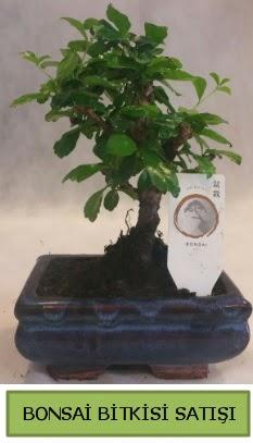 Bonsai ithal görsel minyatür japon ağacı  Yozgat ucuz çiçek gönder