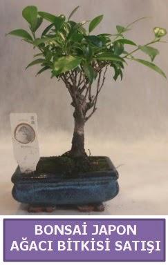 İthal Bonsai japon ağacı bitkisi satışı  Yozgat İnternetten çiçek siparişi