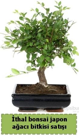 İthal bonsai saksı çiçeği Japon ağacı satışı  Yozgat İnternetten çiçek siparişi