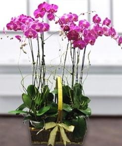 7 dallı mor lila orkide  Yozgat çiçek gönderme sitemiz güvenlidir