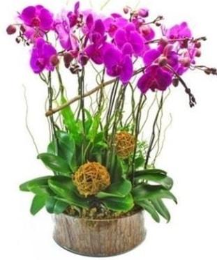 Ahşap kütükte lila mor orkide 8 li  Yozgat internetten çiçek satışı