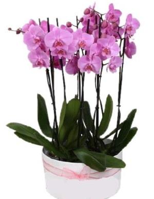 Beyaz seramik içerisinde 7 dallı mor orkide  Yozgat çiçekçi telefonları
