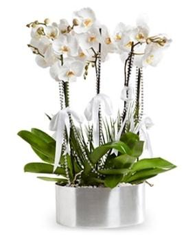 Beş dallı metal saksıda beyaz orkide  Yozgat çiçek yolla