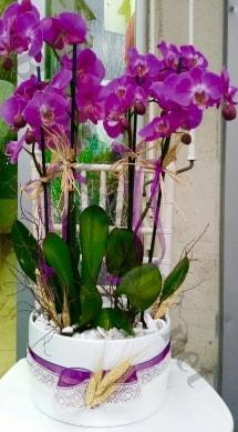 Seramik vazoda 4 dallı mor lila orkide  Yozgat online çiçek gönderme sipariş